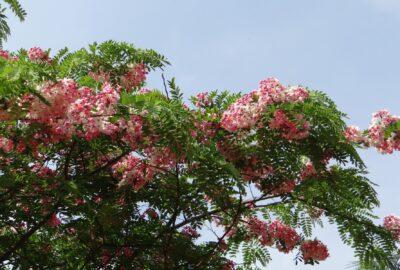 Spring flowers in Bengaluru