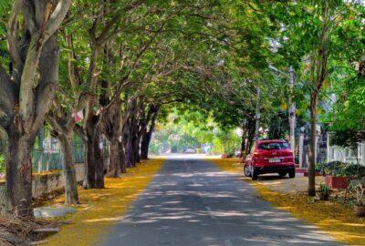 Tree Canopy in Bengaluru street