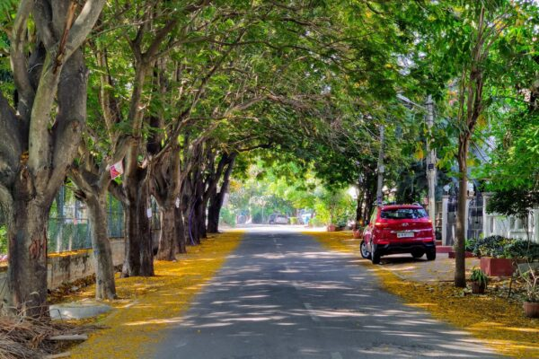 Tree Canopy in Bengaluru street