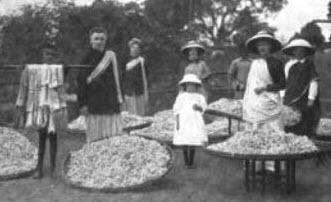1906 AD – Tata Silk Farm started