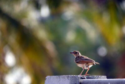 Sparrow in Bengaluru